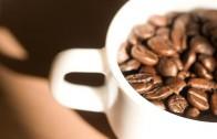 Istina i šarm kafe, 2. deo – dr Petar Borović