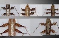 Neobjašnjivi primeri mimikrije iz sveta insekata – Tomislav Terzin