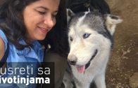 Azil za pse: Zemlja lutalica